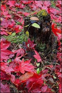 落ち葉の季節 - 薫の時の記憶