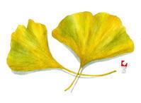 「い」イチョウの葉 - しりしり尻取