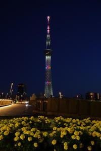 東京スカイツリー - とまれみよⅡ