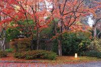 金鱗湖11月14日 - 九重山行クラブ「四季祭 」