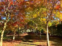 秋の中札内美術村 - ゆるゆると・・・