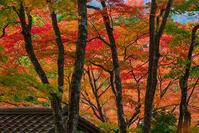 箱根長安寺の紅葉2020 - エーデルワイスPhoto