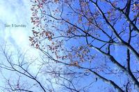 Sun 3 Sunday 冬の入り口編 - 心優先モード(^_^)v
