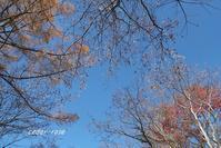 高原の秋 - 瞳の記憶