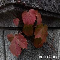 門柱の秋 - 下手糞でも楽しめりゃいいじゃんPHOTO BLOG