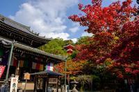 色づき始める今熊野観音寺 - ぴんぼけふぉとぶろぐ2