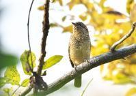 アリスイ他 - くまさんの二人で鳥撮り
