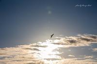freedom - Berry's Bird