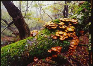 森のキノコ -