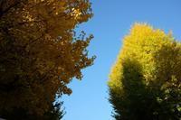 秋を探して - シンプル・ハウスワイフのRANDOM SHOT