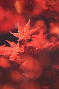 京都府亀岡市の鍬山神社は紅葉の名所と言える - スポック艦長のPhoto Diary