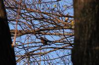 木の実 - 気ままな生き物撮り 弐