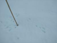 雪の下ニンジンと今日の動物 - 長福ファームのブログ