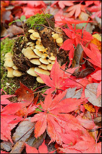 落ち葉の季節~2 - 薫の時の記憶