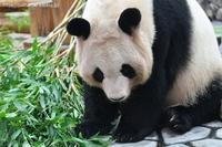 2020年10月白浜パンダ見隊その11 - ハープの徒然草