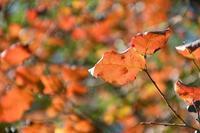秋の装い - ささつぶ