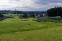 緑の絨毯 - katsuのヘタッピ風景