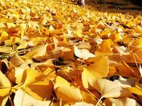 原付スクーターで行く大阪府下最大の大銀杏紅葉ツーリングin大阪府能勢町 - とあるジョグ乗りのツーリングブログ
