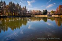 彩の森 入間公園の紅葉 - デジカメ写真集