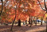 長瀞の紅葉・・・月の石もみじ公園 - 四季折々