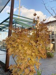 当店の小さい秋&モバイルサウナ7点セットいかがでしょうか!! - 東京ガーデニングスタイル~ガーデン日和~
