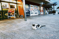 ネコ - ゆっくりポタリング