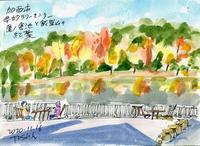 県立フラワーセンター(4)>菊花展とダリア - デジの目