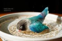 水浴びB.Bの記録(11月12日) - FUNKY'S BLUE SKY