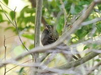那須野が原公園にいた野鳥 - コーヒー党の野鳥と自然パート3
