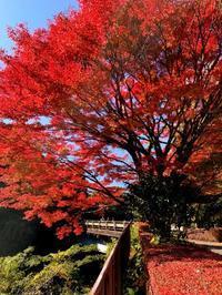 紅葉狩り菊池渓谷に行ってきました - スクール809 熊本県荒尾市の個別指導の学習塾です