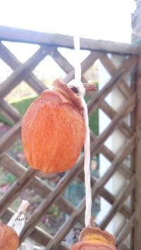 吊るし柿作り…その後 - kaoの小部屋