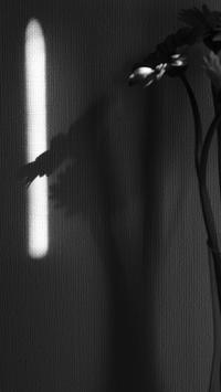 光る / X100F - minamiazabu de 散歩