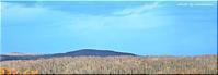 森見の塔からパノラマ画像 - 北海道photo一撮り旅