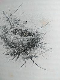 ジャコメリ鳥絵の古本。 - 古道具ときどき猫。