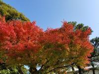 ◆ 北陸へ「カニ、ブリしゃぶ」その4、【金沢城公園】紅葉編(2020年11月) - 空とグルメと温泉と