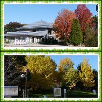 柏の葉で「ハンギングバスケット作り」へ(^^♪ - ポポの日記と花とドライブ
