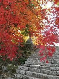 大山寺の紅葉 - 藍。の着物であるこう