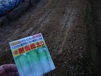 大根と小粋菜(白蕪)と春菊の3作目、ほうれん草とベビーリーフの2作目の種まき - ざっかラボ九隆庵 創作事情