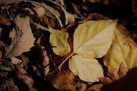 Autumn Leaves - お山遊び