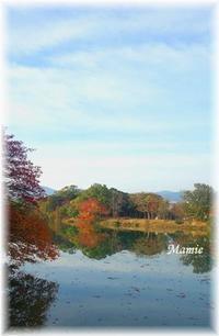 公園の水辺の紅葉と今朝の翡翠ちゃん - おだやかに たのしく Que Sera Sera