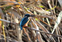 MFの沼で逢えた鳥たち - 私の鳥撮り散歩