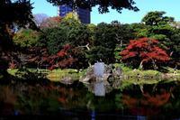 小石川後楽園の紅葉 - お散歩写真     O-edo line