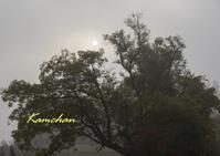 福知山の長安寺へ - カンちゃんの写真いろいろ