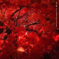 庭の紅葉 - Illusion on the Borderline  II @へなちょこ魔術師