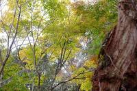 西公園の紅葉2 - きずなの家創り