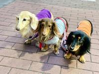 20年11月18日ネムネムタイム&サロン! - 旅行犬 さくら 桃子 あんず 日記