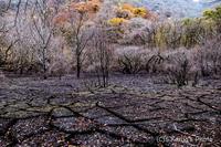 11月の夏日 - 撃沈風景写真