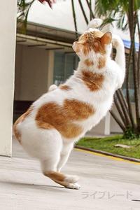 ご近所猫 2020.11.14 - Rayblade Photos