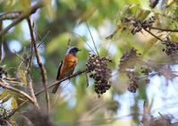 今日のS園 - 写真で綴る野鳥ごよみ