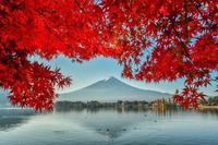産屋ヶ崎の真紅の紅葉 - 風とこだま